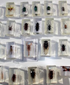 insecten-mix in hars