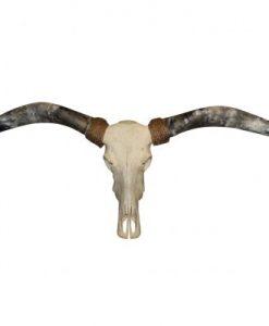 longhorn-grijze-hoorns- Mister-T.
