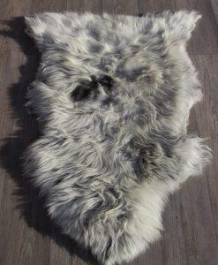 schapenvacht-heideschaap-grijs-34