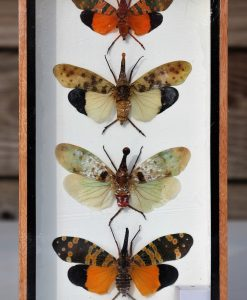 insecten-box-verzameling-zanna