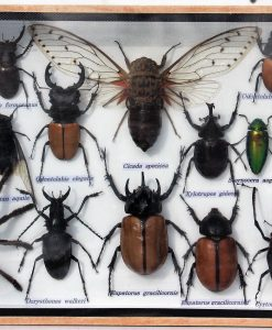 insecten in grote box