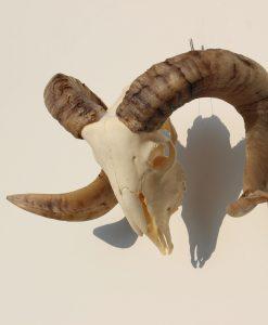 ram-schedel-gothic-40