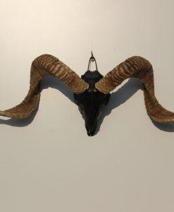 ram-schedel-gothic-black