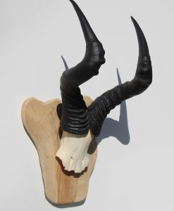 hartenbeest-gewei-taxidermy