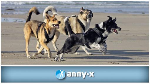 anny-x-geschirre-in- nederland