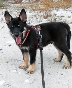annyx-hondentuig-puppy-xxs