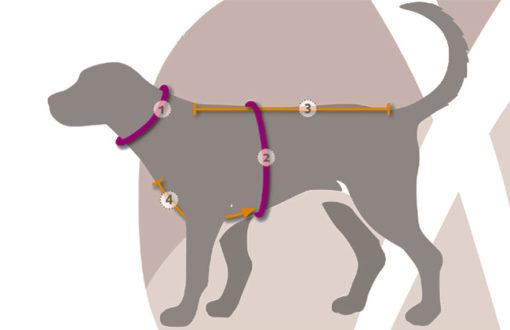 maat tabel voor annyx hondenharnas