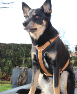 annyx-hondentuig-kaneel-zwart