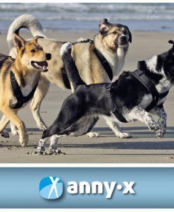 annyx-hondentuig-te-koop-