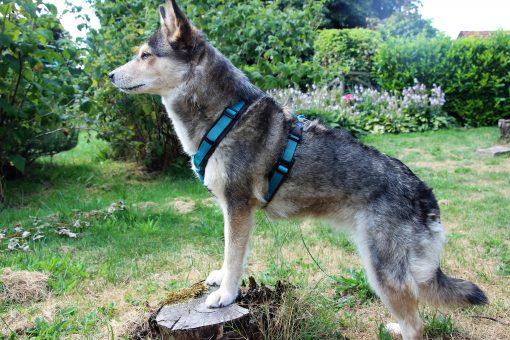 Annyx-het beste hondentuig-y-model-