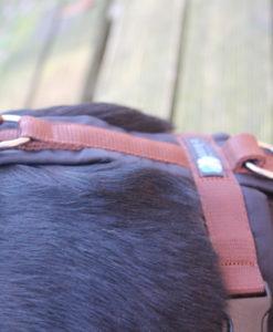 annyx-hondentuig-zwart-bruin