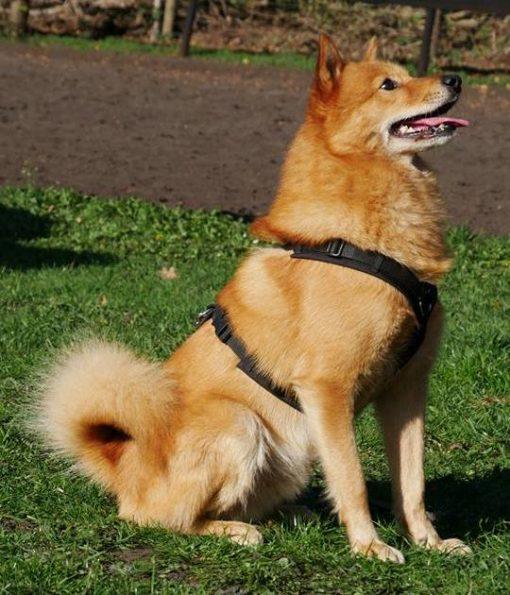hondentuig-annyx-zwart- maat-S