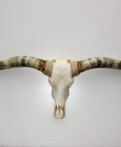 Longhorn 170