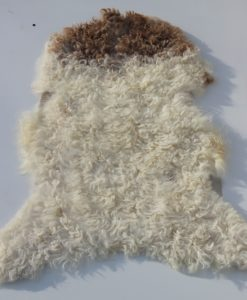 lamsvacht-schapenvachtVS5 (2)