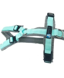 harness-fun-l-grey-mint-limited-edition