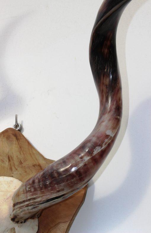 kudu-hoorn-gewei-detail