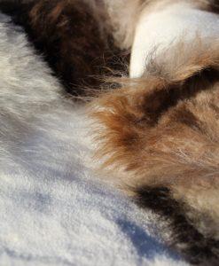 schapenvacht-ijsland-taupe-mix-d2100
