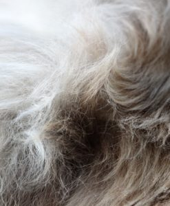 schapenvacht-taupe-dx-902