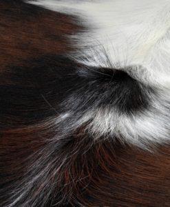 kuhfell-koeienhuid-tapijt-cowhide-XL 29