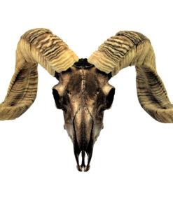 ram-skull-decoratie-brons