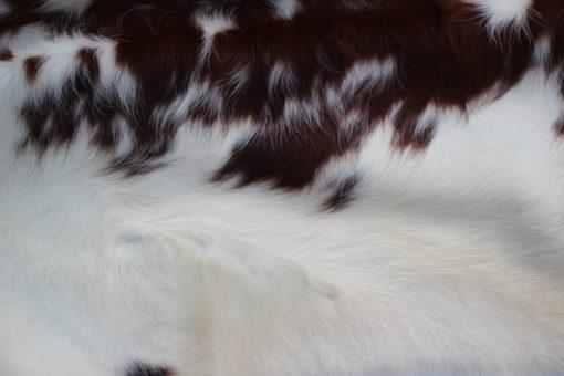 detail foto rood bonte koeienhuid