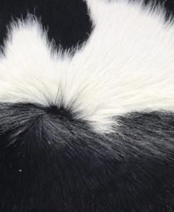 mooie zwart/witte weerborstel op zijn rug