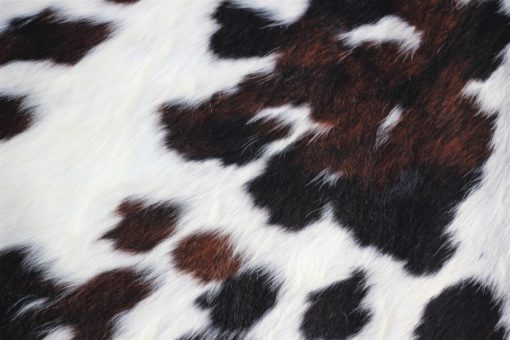 mooie Normandische driekleur koeienhuid