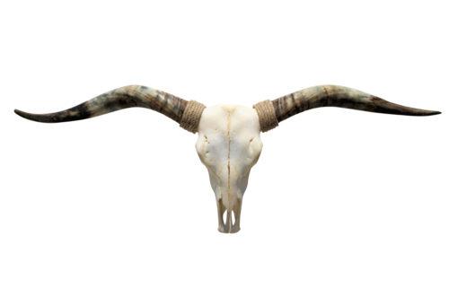 Longhorn design jacky