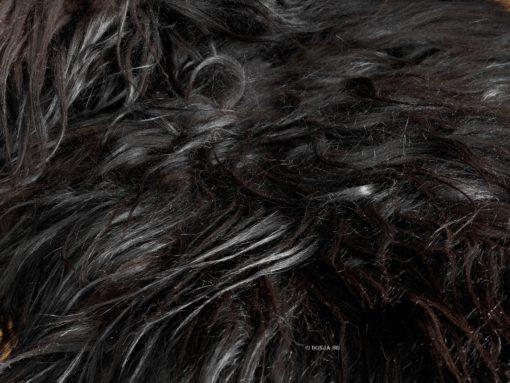 schapenvacht-tapijt-ijsland-LH-duo-zwart-