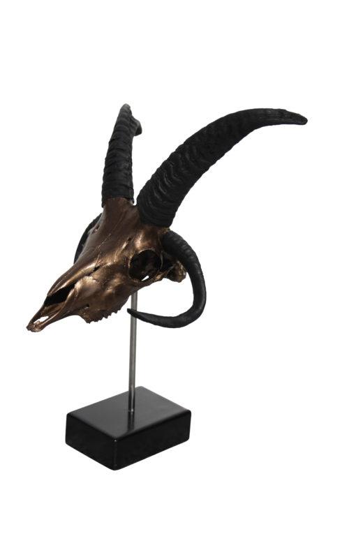 schaap-ram-met 4 hoorns-donja-hd-design