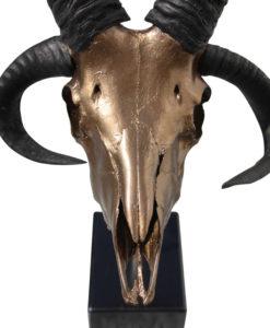 schaap-ram-met 4 hoorns