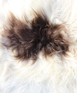 schapenvacht-wit-bruin-langharig-ijsland-14035