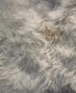 schapenvacht-lamsvacht-wit-4051