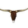 longhorn met stierenvacht XL