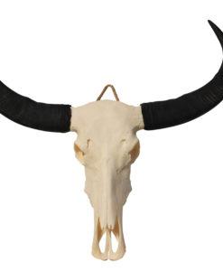 waterbuffel-xl-lange-hoorns