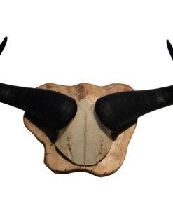 gnu-wildebeest-donja-hd-te-koop-