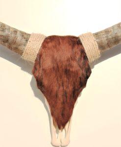 donja-hd-longhorn-2-detail-foto-skull-