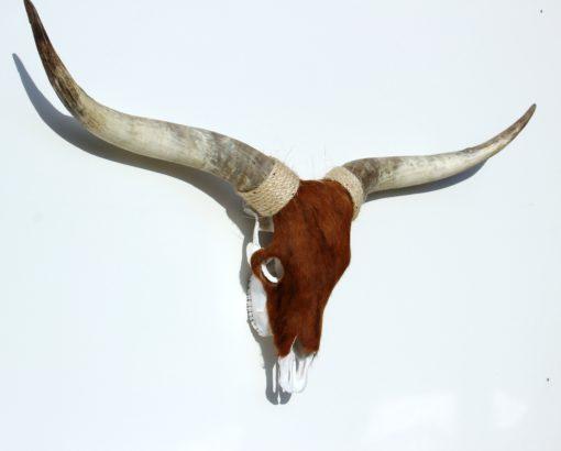 donja-hd-longhorn-3-detail-foto-skull-