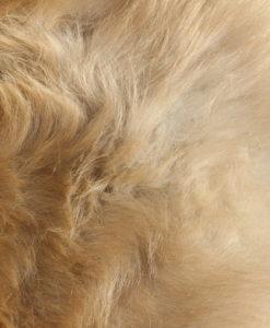 donja hd schapenvacht nr 12-5 offwhite/ivoor en oranje wol