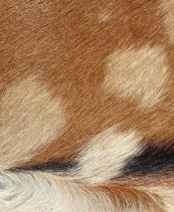 mooie bonte geitenhuid-2101-100/85