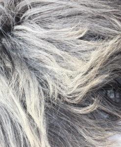 heideschapenvacht-XXL- grijs-detail