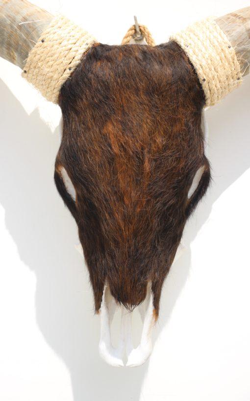 longhorn-koe-vacht-design-3