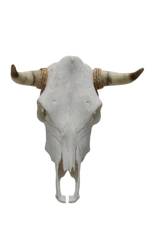 runderschedel-stierenkop-nr-5