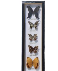 5 vlinders in een wandlijst. nr 2