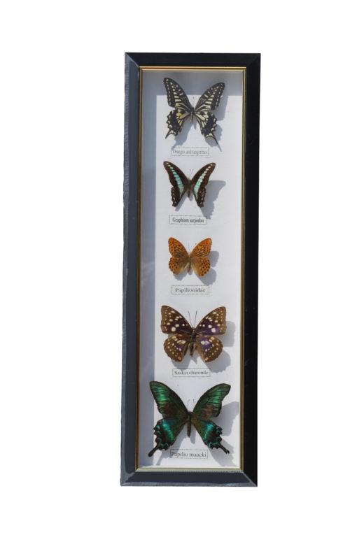 vlinders-in-lijst-4-